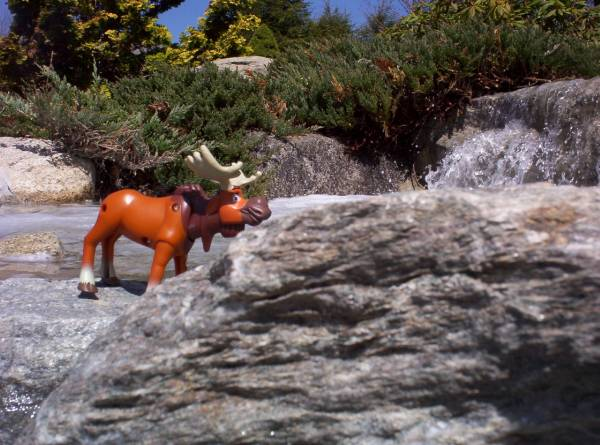 More Moose.....