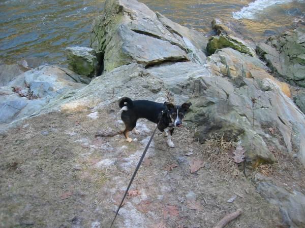 Moxie at Presumptscot River Cache
