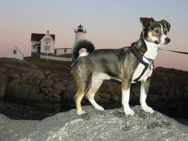 Moxie at Nubble Light