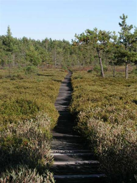      Saco Heath Preserve