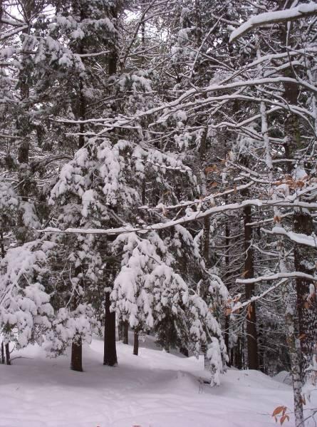 snowshoe caching