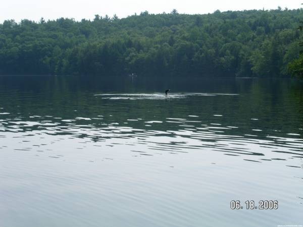 The loon we passed on the lake