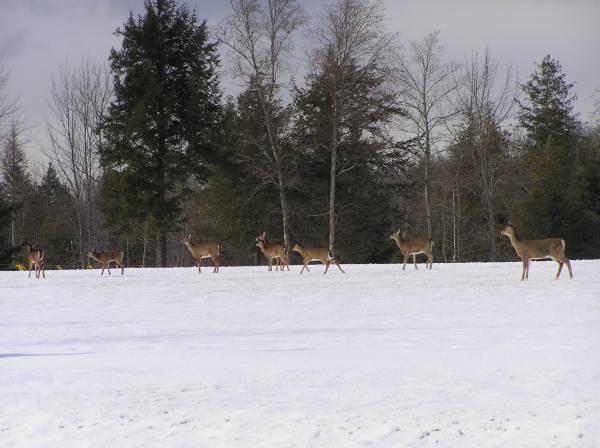 A_few_deer
