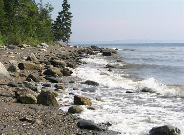 Sears Island Shoreline
