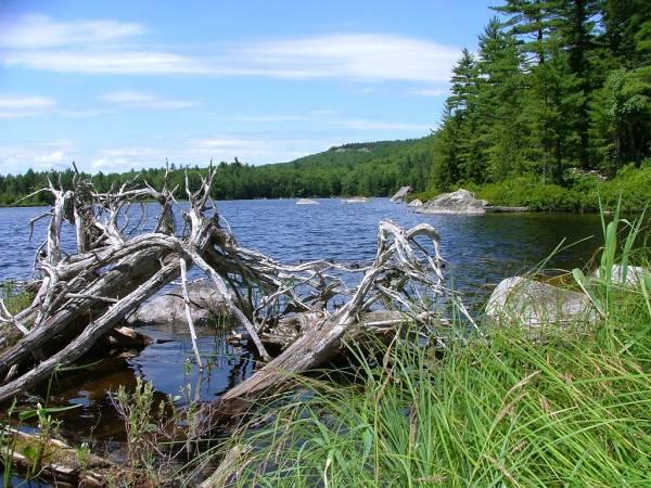 Halfmile Pond (GCH21C)