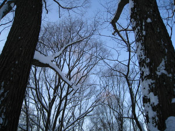 Frozen_trees