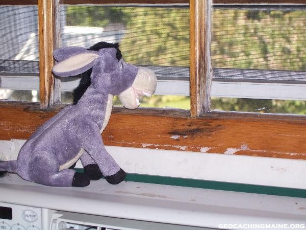 donkey_window