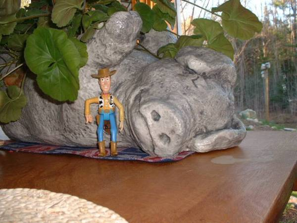 TB Woody and the pig